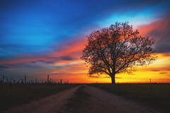 Sunset (Marc Braner) Tags: ifttt 500px sunset sun dramatic sky moody dusk twilight horizon backlit over land sunbeam rhinelandpalatinate worms germany europe outdoors old town landmark cultivated agriculture farm rural mist rheinhessen fields landscape tree field scene