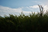 Grass (epm photography) Tags: clouds cloudscape travel travelphotography greece corfu landscape sunset view street urban