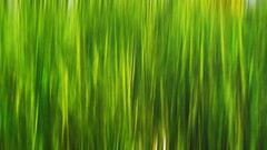 grass (Rino Alessandrini) Tags: backgrounds nature greencolor abstract pattern grass plant leaf summer illustration freshness backdrop growth environment springtime vibrantcolor forest defocused colors outdoors