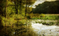 Lily Lake (socalgal_64) Tags: carolynlandi lily pond lake nature pennsylvania saylorsburgpa landscape waterscape hamiltontownshippa serene scenic picturesque texture usa coth5