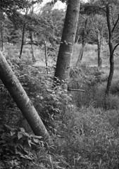 May 29 (Holden Richards) Tags: 240 northcarolina 1905koronaview fomapan100 5x7film hc110 viewcamera antiquecamera 5x7camera largeformat analog bn bw orange county film 5x7 smalltown hillsborough holdenrichards gclaron240mmf45 blackandwhite enoriver tranquilscene hillsboroughnc spring 2018