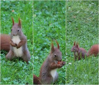 Hamburger  Eichhörnchen Kinder