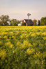 Fields of Yellow (SteveFrazierPhotography.com) Tags: farm flowers field yellow windmill barn country countryside farming agriculture trees stevefrazierphotography dandelions seeds scene scenery landscape colchester mcdonough county illinois il beautiful summer silo brick butterweed weeds