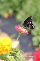 Manoff Farms  (14) (Framemaker 2014) Tags: mangas farm market gardens bucks county southeastern pennsylvania flowers united states america new hope