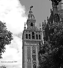 The Bell Tower La Giralda (mariagrandi985) Tags: tower belltower campanario lagiralda thegiraldabelltower sevillecathedral sevilleandalusiaspain sevillaandalucíaespaña seville sevilla architecture architecturedetails architecturebeauty contrast highcontrast blackandwhitephotography blackandwhiteandgray blancoynegro blanconegroygris noiretblanc biancoenero uploadedonjune122018 mariagrandi985