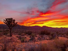 In a world of pure imagination. (Ryan Hallock) Tags: usinterior nps joshuatreenationalpark deserted sand redsky skies freephoto peaceful getaway travel mojavedesert nature beauty evening clouds orographic sunset iphonex serenegreencabin yuccavalley joshuatreesunset