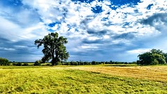 agriculture-clouds-countryside-1095831 (zsolt.palatinus) Tags: agriculture clouds countryside field grass oak landscape rural cc free