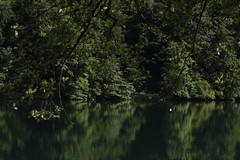 Green Is All You Need (1/2) (K M V) Tags: green grün vert verde vihreä grön heijastus reflection reflectionsonwater reflectiononlake rotsee greenery vehreys vehreä leaves blätter blad lehdet feuilles color couleur farbe färg väri vesi vatten vattnet insjö lake water wasser leau aqua lac lago see järvi kesä summer sommer sommar estate trees bäume puut puita lehtipuita träd lövträd laubbäume deciduoustrees arbres arbole alberi