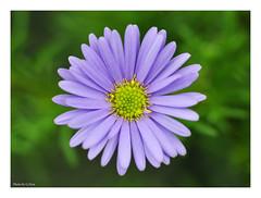 Purple petals (Graham Pym On/Off) Tags: flower petals purple nikon macro flora smileonsaturday preciouspurple coth coth5 alittlebeauty
