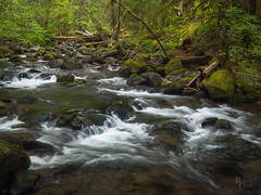 Falls Creek Green (RobertCross1 (off and on)) Tags: 20mmf17panasonic carson em5 fallscreek longexposure omd olympus pacificnorthwest skamania wa washington creek forest landscape moss rapids stream trees water waterfall