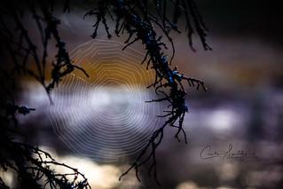 Spiderweb at first sunlight