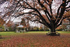 Autumn..... (flying-leap) Tags: newzealand northcanterbury nz southisland the4seasons winter seasons autumn rangiora park 4autumn sony sonydscrx10m4 sonydscrx10iv sonyrx10iv rotunda grass