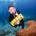 Diving at the Great Barrier Reef (28-30 May)