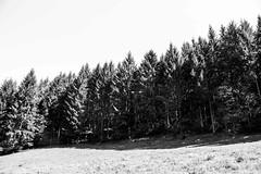 IMG_0979 (izabelbo) Tags: belgium nature blackandwhite black white bnw summer forest bos las wallo wallonia europe