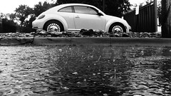 Raindrop backjets with background bug (Thiophene_Guy) Tags: thiopheneguy originalworks olympustoughtg4 tg4 olympustg4 olympusstylustg4 tough rain rainyday lowperspective floorperspective groundperspective splash raindrop weather backjet
