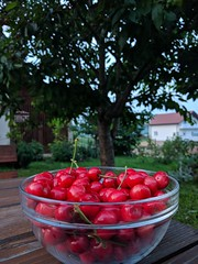 Life IS a Bowl of Cherries (ARKNTINA) Tags: europe croatia hr18 eur18 random6 grabovac grabovaccroatia guesthouse hotel apartment bb airbnb housečorak homestay cherries fruit cherrytree cherry flora