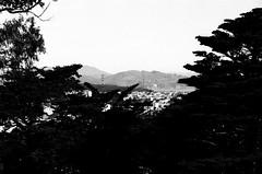 Vue sur le Pont / Buena Vista Park - San Francisco, Californie (Ludovic Macioszczyk Photography) Tags: vue sur le pont buena vista park san francisco californie nikon fm 135 kodak tmax 400 iso mai 2018 étatsunis © ludovic macioszczyk usa film argentique lumière 35mm noir et blanc monochrome california voyage vacances golden gate bridge grain bay area city sf amérique
