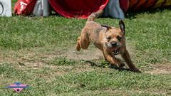 _DSC0935 (SeverX9) Tags: sony alpha 6500 70200gf4 dog run