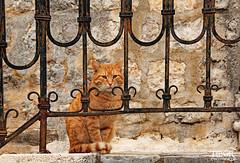 Behind bars (morbidtibor) Tags: cat kat kater poes kitten pussycat budva montenegro