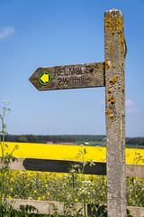 Yellow Field/Yellow Arrow. (Aranelinya) Tags: canon80d oilseedrape yellow efs1585mm sign publicfootpathsign publicfootpath helmsley northyorkmoors yellowflowers englishcountryside field signpost