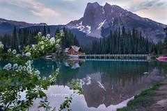 Emerald Lake (Margarita Genkova) Tags: yohonationalpark rockymountains emeraldlake bc landscape nature