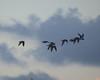 IMG_6245 (stevefenech) Tags: south pacific islands travel adventure stephen steve fenech fennock marshall birds