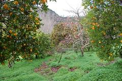 Frutales en invierno