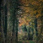 Waldweg thumbnail