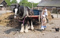 Acton Scott manure cart 04 may 18 (Shaun the grime lover) Tags: animal farm horse vehicle actonscott victorian museum shropshire salop cart manure fertiliser field