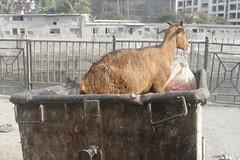 Plastic Ban Better Late Than Never (firoze shakir photographerno1) Tags: marriammenfeast2018 madraswadi worli shanmugham streetphotography hinduism shotbyfirozeshakir karumarriammen