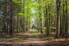 The path goes straight (Petr Sýkora) Tags: les nature forest path green outside czech