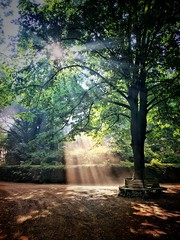 Here comes the sun.. I say, it's alright.. (frata60) Tags: netherlands nederland forest bos rays zonnestralen eelde iphone 7plus morning ochtend sun zon bank boom tree trees