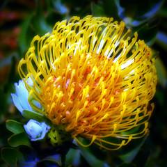( ... une fleur unique au monde ... ) (Wandering Dom) Tags: fleur nature earth multiverse time life photosynthesis blooming unique monde world roam wandering