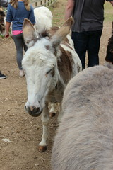 IMG_20180529_122637 (Luna-Woona Moon) Tags: donkeys rescue animals equine devon england