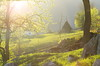 Step into the light (Baubec Izzet) Tags: baubecizzet pentax light landscape spring flickrunitedaward