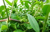 Green grasshopper (Tabea-Jane) Tags: green grasshopper leafs nature garden grün grashüpfer laub blätter natur garten leipzig saxonia germany