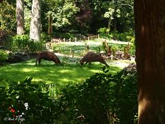 Duel (mark.griffin52) Tags: olympusem5 england dorset abbotsburysubtropicalgardens deer wicker sculpture garden