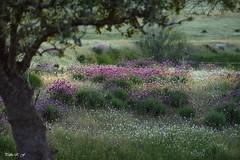 Mirada primaveral (pedroramfra91) Tags: naturaleza nature primavera spring exteriores outdoors colores colors arboles trees flores flowers