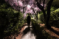 But that was just a dream... (Constantinos_A) Tags: sony a6300 woman walking dark night handheld photography perfect best dreamy ghostly glyfada attica pave soil green tree