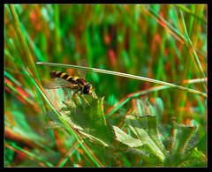 Refusing to Hover - Anaglyph 3D (DarkOnus) Tags: refusing hover pennsylvania buckscounty panasonic lumix dmcfz35 3d stereogram stereography stereo darkonus closeup macro insect anaglyph