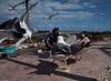 The man and the birds (thierry_meunier) Tags: afrique essaouira maroc morocco birds city fisherman harbour mer mouette ocean oiseaux pecheur port sea seagull travel ville voyage