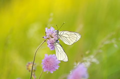 Meeting (Baubec Izzet) Tags: baubecizzet pentax bokeh butterfly nature flickrunitedaward