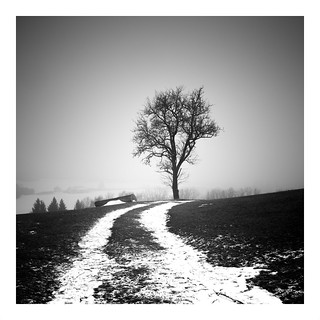 last walk in the snow
