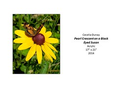"""Pearl Crescent on a Black Eyed Susan • <a style=""""font-size:0.8em;"""" href=""""https://www.flickr.com/photos/124378531@N04/42646142921/"""" target=""""_blank"""">View on Flickr</a>"""