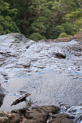 Australia_2018-167.jpg (emmachachere) Tags: subtropical trees hike waterfall boatride springbrook australia rainforest kanagroo animals koala brisbane boat lonepinekoalasanctuary