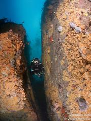 DUW_2411 (Volker Vierecke) Tags: australia bicheno tasmansea tasmania tauchen underwater