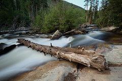 Wild Basin (Shedugengan) Tags: wildbasin rockymountainnationalpark rmnp stream forest log