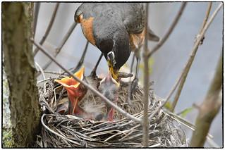 Feeding series (5/9 images)