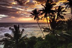 Our view (*LaurenMcCartney*) Tags: canon600d srilanka enjoysrilanka nature natgeo wildlife travel adventure
