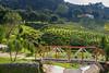malaysia-6725 (ericvdb) Tags: cameronhighlands highlands teaplantation plantation malaysia